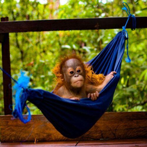 Nyaru Menteng Orangutan Sanctuary